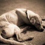 Malassorbimento nel cane: cause, sintomi, alimentazione e rimedi naturali.