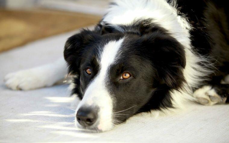 Piometra nel cane: sintomi, terapia, chirurgia e post-operatorio.