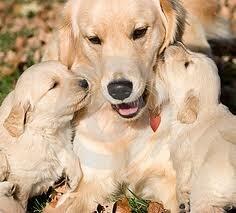vaccini cane