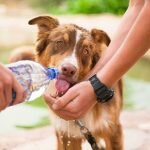 Calcoli di struvite nel cane : fattori di rischio, alimentazione, sintomi e segreti per una buona prevenzione.