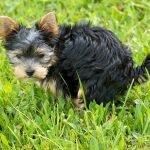 Parvovirosi canina: cos'è? Quali sono i sintomi e le terapie?